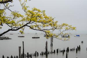 spring_tree_river_roufa_small